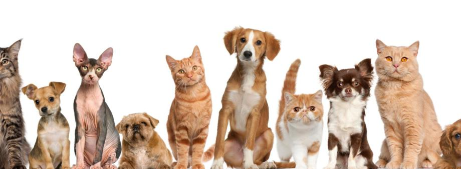 Michael Killmer DVM welcomes you to Hill-Crest Veterinary Hospital where we care for your dog and cats health and wellness.